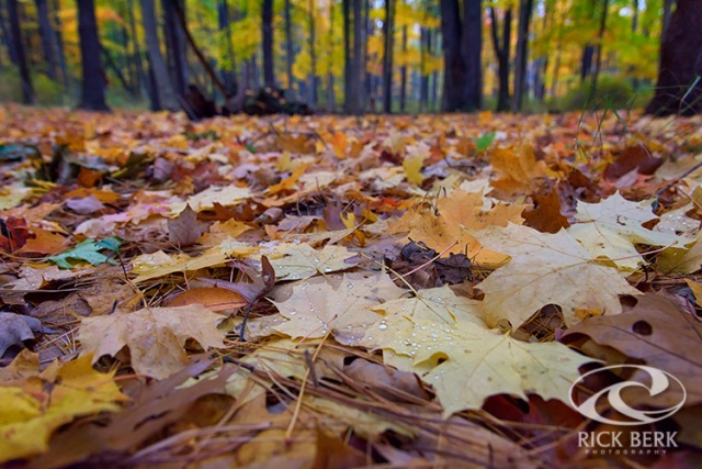 Autumn on the Forest Floor