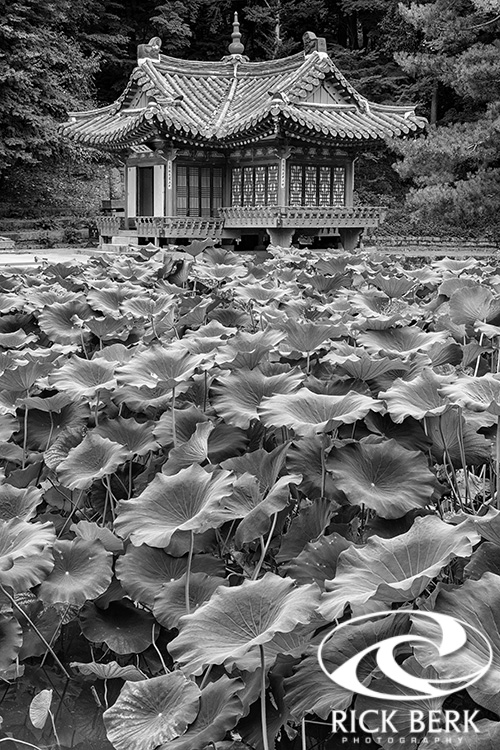 Secret Garden In Black And White
