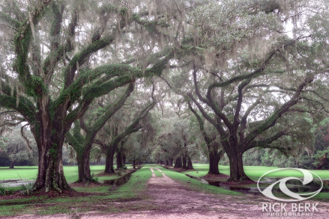 Oaks In Laurel Hill Park, Mount Pleasant, SC